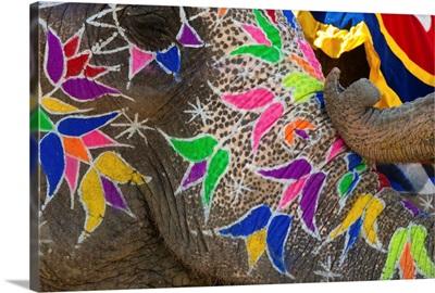 Festival of Colors I