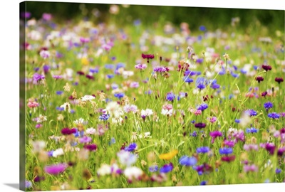 Field of flowers in Paintography