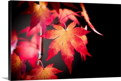 Fire Leaves