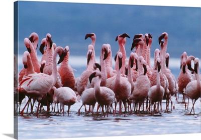 Flamingo Row