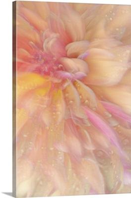 Floral Flames III