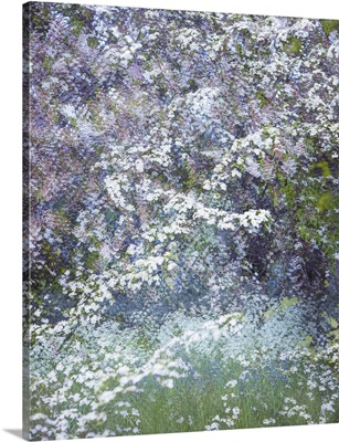 Floral Froth III