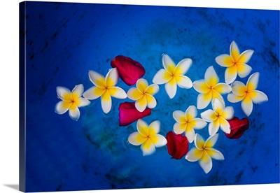 Flowers of Laos