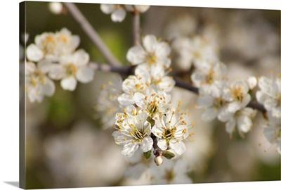 Focusing on Spring