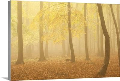 Forest Fog II