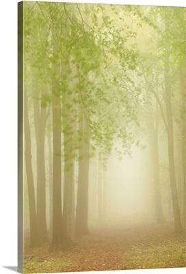Forest Softness