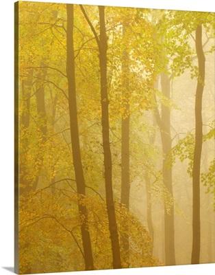 Forest Softness II