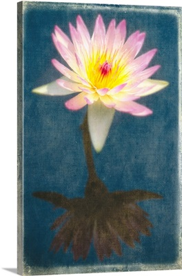 Fragrant Water Lily with Reflections