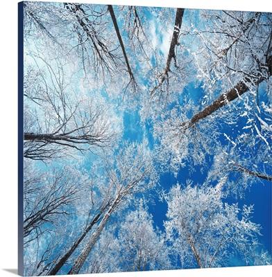 Frozen Sky