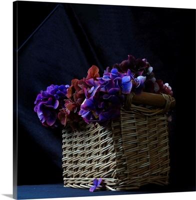 Hydrangea in Basket II