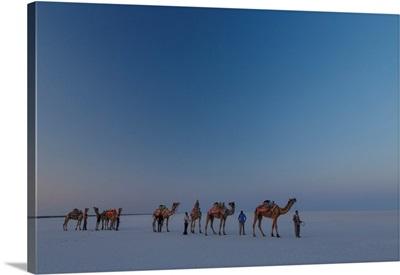 India, Gujarat, Camel Caravan