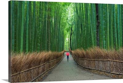 Kyoto, Japan II