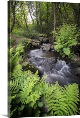 Le ruisseau du Pont Dom Jean