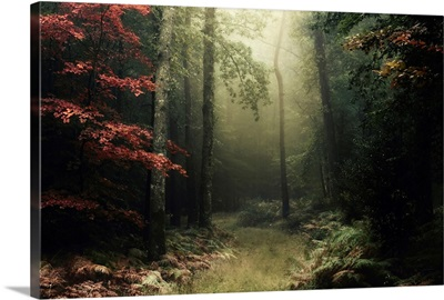 Legendary Forest in Brittany