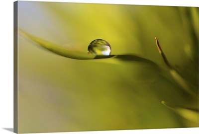 Lonely Green Drop
