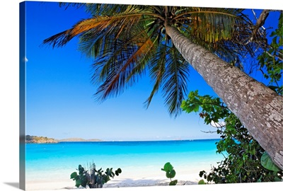 Low Angle View of a Leaning Palm Tree on a Tropical Beach, Trunk