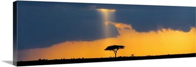 Masai Mara National Park, Kenya