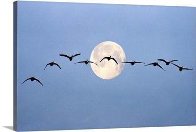 Moon Flight