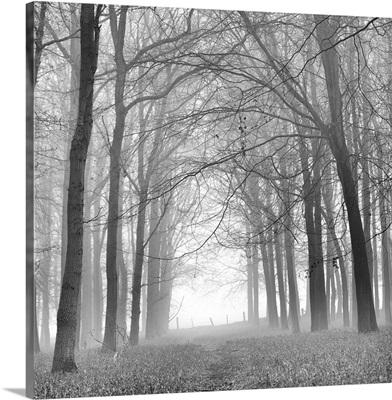 Morning Mists IV