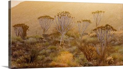 Namibia, Namib, Naukluft