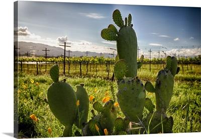 Napa Valley Cactus I