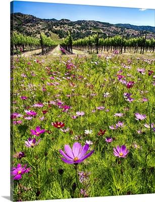 Napa Wildflowers II