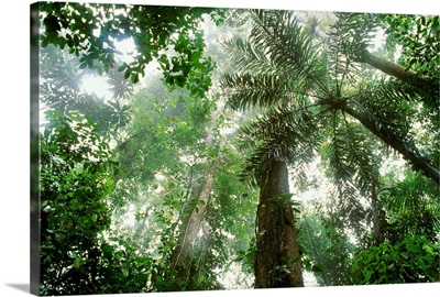 Natures Canopy