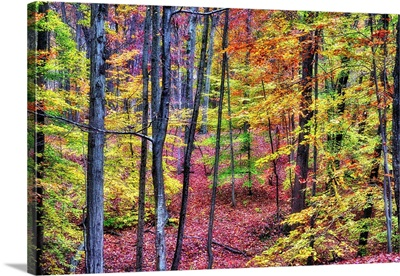 New Jersey Autumn Forest