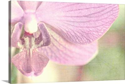 Orchids Softness