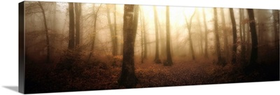 Panoramic Forest
