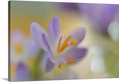 Pastel Spring II