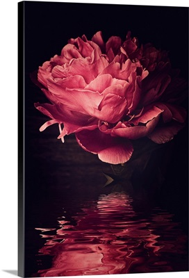 Peony Over Water