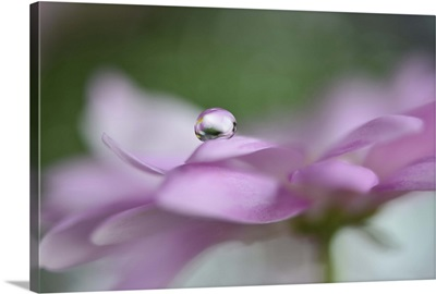 Pink Delight In A Drop
