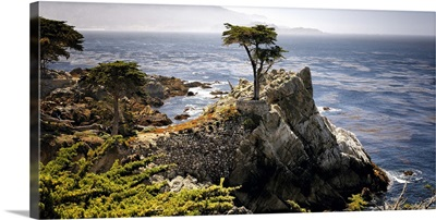 Point Lobos, Carmel