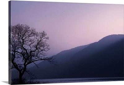 Purple Hours