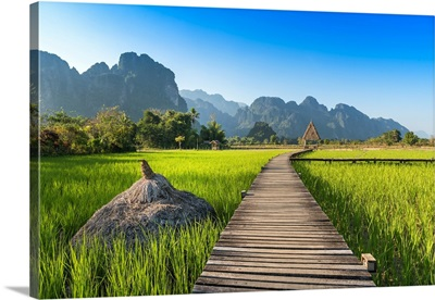 Rice Field of Laos