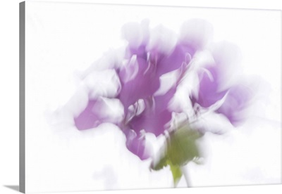 Scent Of A Brushstroke