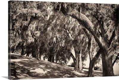 Sepia Trees