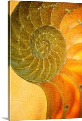 Shells VII