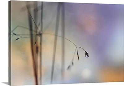 Single drop spring