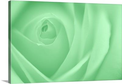 Soft Rose V
