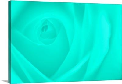 Soft Rose XI