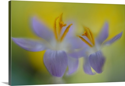 Soft Spring Talk