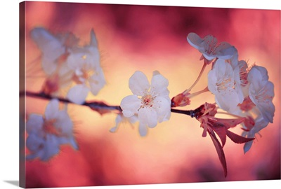 Spring Time II