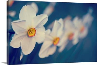 Springtime Scent