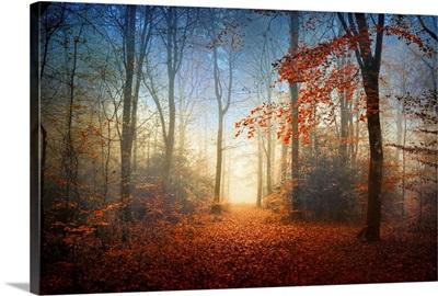 Sunrise in the Broceliande Forest