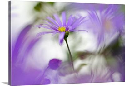 Swaying in Purple