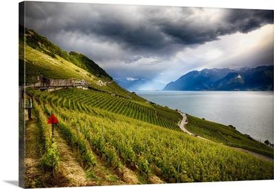 Terraced Vineyard at Lake Geneva