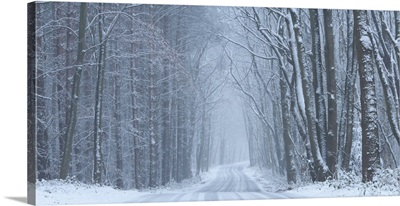 The Cold Road Home