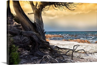 The Old Tree and The Sea